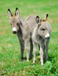Baby donks